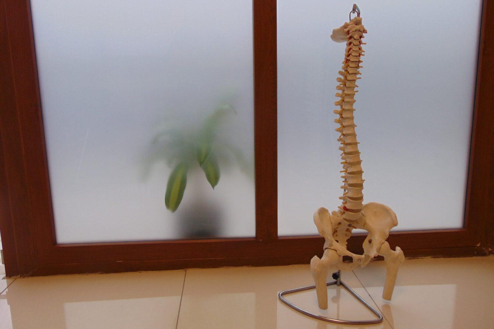 Columna vertebral en pedestal en un box de Oxígeno